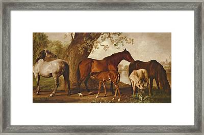 Mare And Foals Framed Print