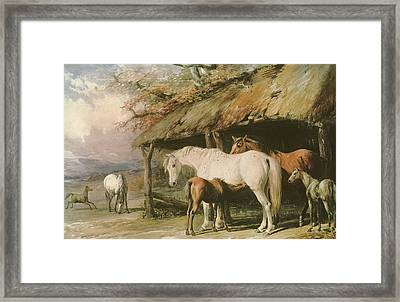 Mares And Foals Framed Print