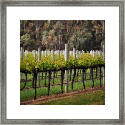 Margaret River Vines Framed Print