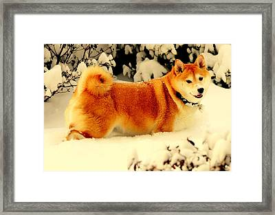 Margo Likes The Snow Framed Print by Aron Chervin