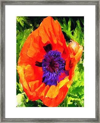 Margo's Poppy Framed Print by Randy Sprout