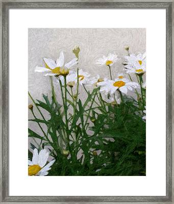 Marguerites Framed Print by Lutz Baar