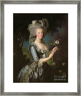 Marie Antoinette Framed Print by Elisabeth Louise Vigee Lebrun