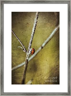Marienkaefer - Ladybird Framed Print