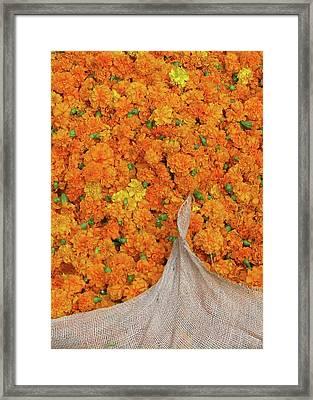 Marigolds II Framed Print by David L Griffin