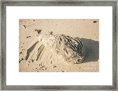 Marine Deaths Framed Print by Jorgo Photography - Wall Art Gallery