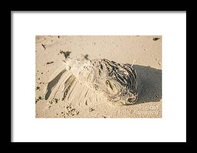 Angle Fishes Framed Prints