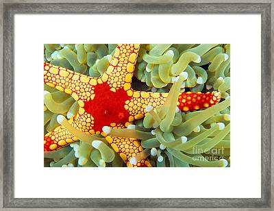 Marine Life, Close-up Framed Print by Dave Fleetham - Printscapes