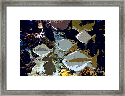 Marine Life Framed Print by David Lee Thompson