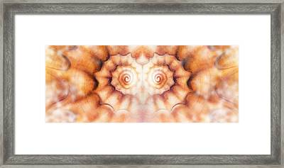 Marine Sea Shell Illustration Orange Color Paintings Mandale Effect Framed Print
