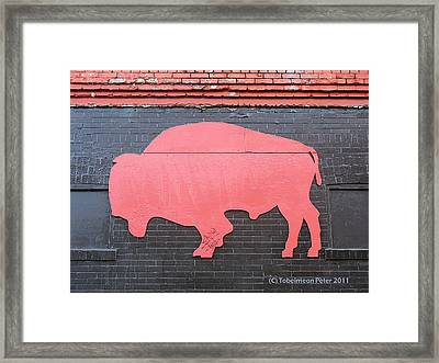 Maris' Bison Framed Print by Tobeimean Peter