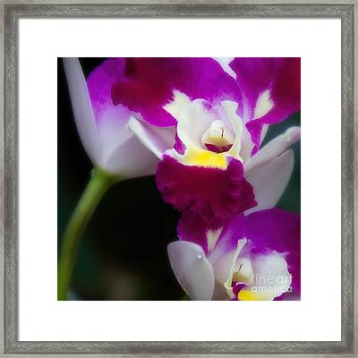 Maris Magic Orchid Framed Print