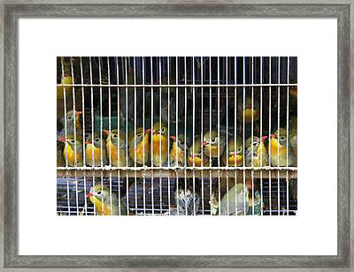 Market Finches Framed Print