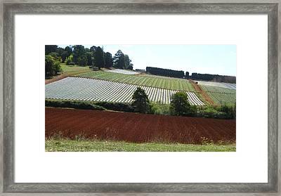 Market Gardening Framed Print