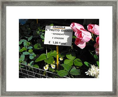 Market Stall Framed Print by Gerald Hiam