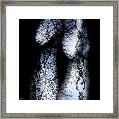 Markings On Her Stockings Framed Print by Dawn M Brewer