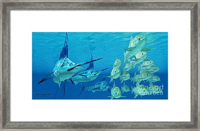 Marlin Attack Ayu Fish Framed Print by Corey Ford