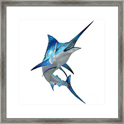 Marlin Fish On White Framed Print by Corey Ford