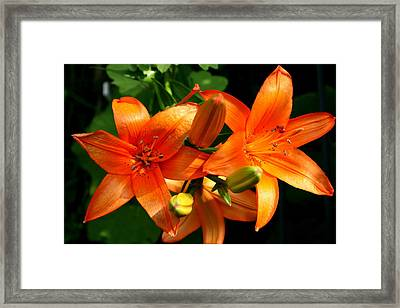 Framed Print featuring the photograph Marmalade Lilies by David Dunham
