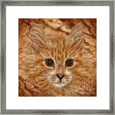 Marmalade Framed Print