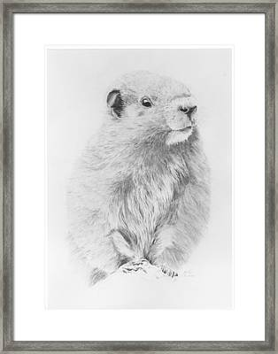 Marmot Framed Print by Glen Frear