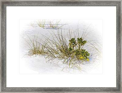Marngrove And Sea Oats Framed Print by Marvin Spates
