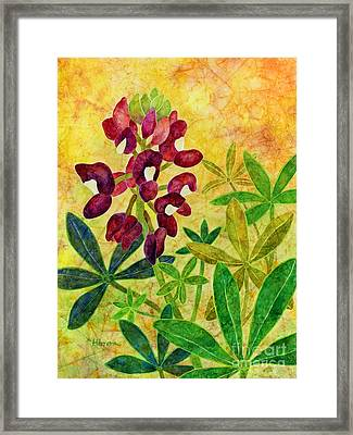 Maroon Bluebonnet Framed Print by Hailey E Herrera