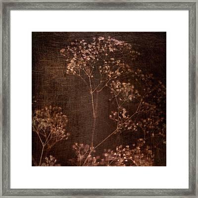 Marroncito Framed Print