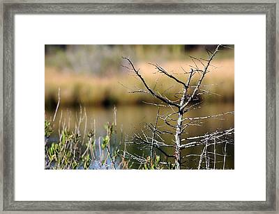 Marsh Afternoon Framed Print by Mary  Haber