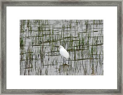 Marsh Bird 1 Framed Print