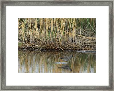 Marsh Bird 2 Framed Print