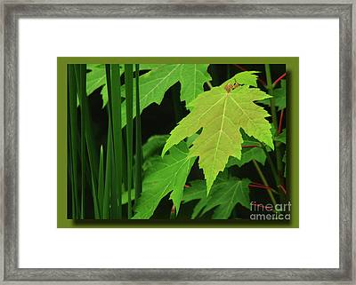 Marsh Edge Greens Framed Print by Deborah Johnson