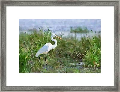 Marsh Egret Framed Print by Betty LaRue