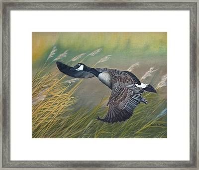 Marsh Goose Framed Print