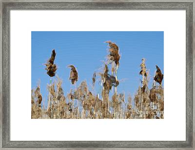 Marsh Grass Framed Print by Christopher Purcell