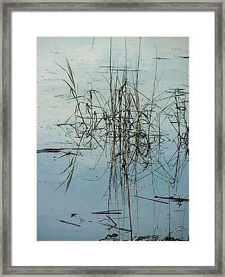 Marsh Grass Framed Print by Donna Thomas