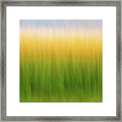 Marsh Grass Framed Print