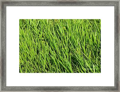 Marsh Grasses Framed Print
