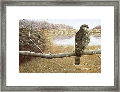 Framed Print featuring the painting Marsh Hawk by Laurie Stewart