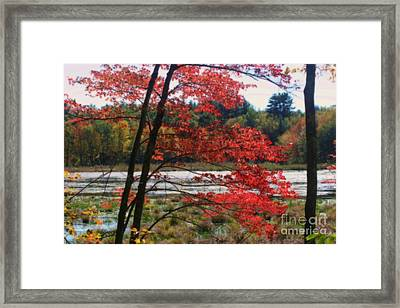 Framed Print featuring the photograph Marsh In Autumn by Smilin Eyes  Treasures