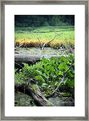 Marsh Framed Print by Jeannie Burleson
