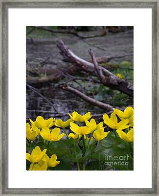 Marsh Marigolds Framed Print