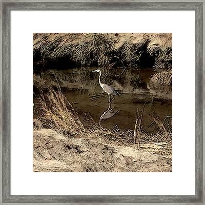 Marsh Bird Framed Print