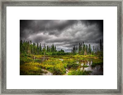 Marsh Near The Lake Framed Print by Michel Filion