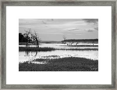 Marsh Skeletons Framed Print by Phill Doherty