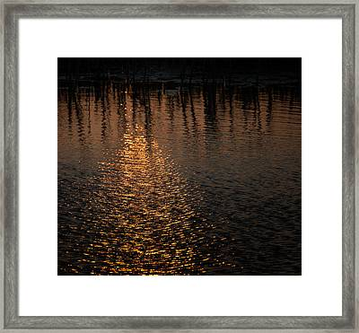 Marsh Sunrise Framed Print