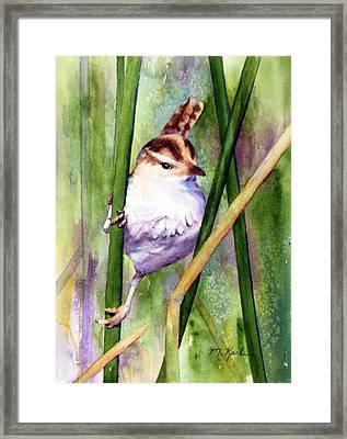 Silver Creek Marsh Wren Framed Print
