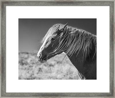 Marshall Framed Print by Joe Hudspeth