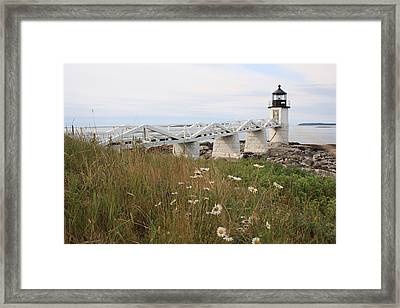 Marshall Point Daisies Framed Print