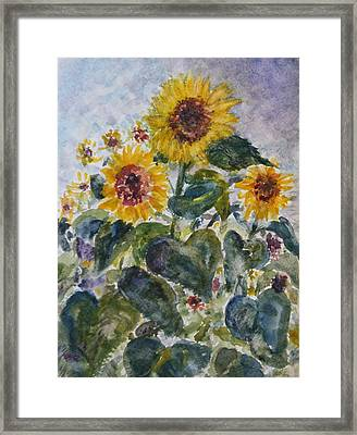 Martha's Sunflowers Framed Print